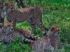 Serengueti, África