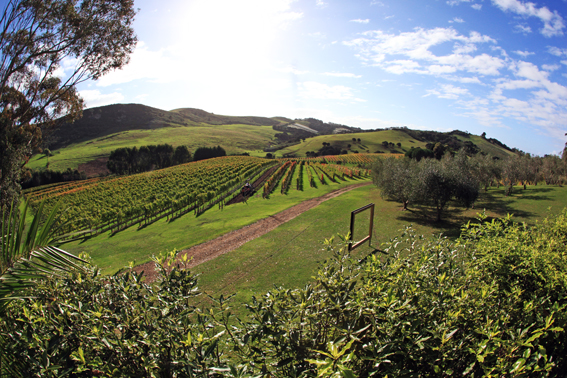 Vista do Stonyridge Vineyard